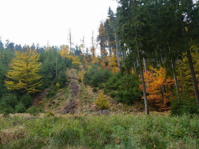 Těchonín - lesní porost v horní části Uhelného dolu