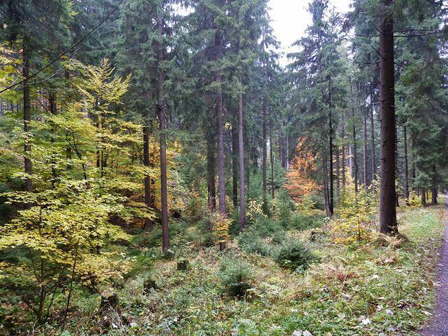 Těchonín - lesní porost podél cesty Uhelným dolem do Těchonína