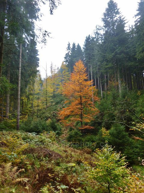 Těchonín - lesní porost podél cesty po zelené TZ z Boudy do Těchonína