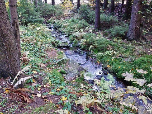 Těchonín - Těchonínský potok