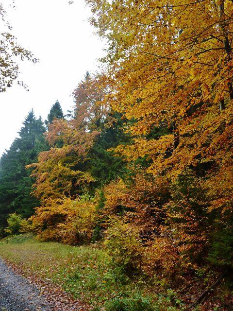 Těchonín - barvy podzimu na cestě z Boudy do Těchonína po zelené TZ