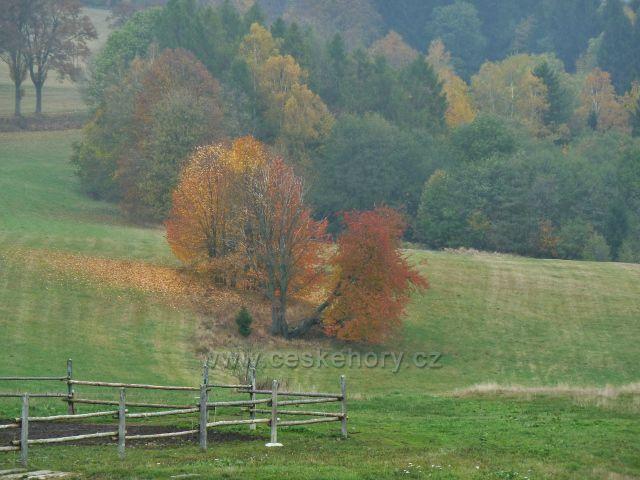 Vlčkovice - barvy podzimu na pastvině pod silnicí do Mladkova