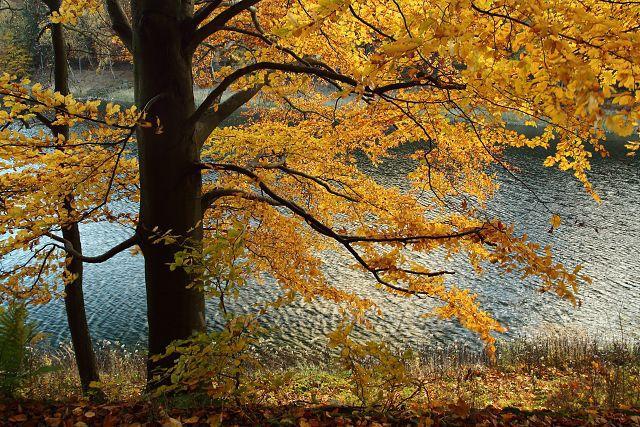 Na břehu Janovské přehrady