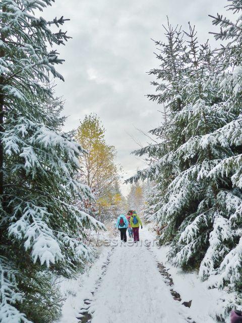 Litice - zimní cesta z vrcholu Chlumu nad Litický lom