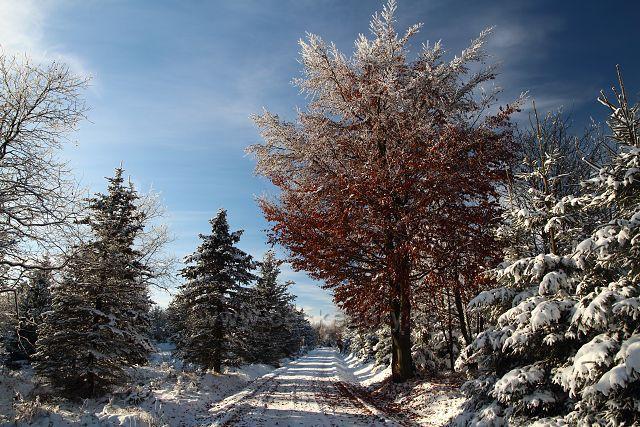 Podzim i zima u Dlouhé Louky