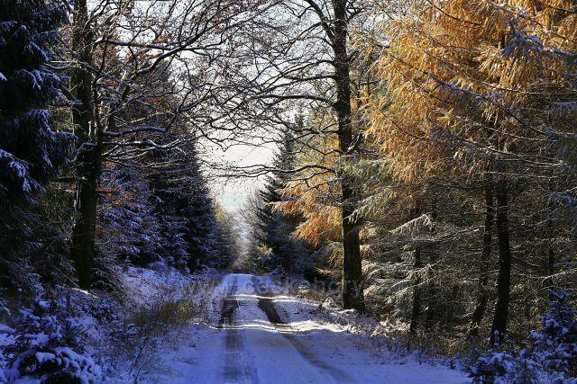 Cesta s modříny