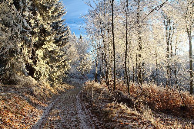 Cesta zmrzlým lesem
