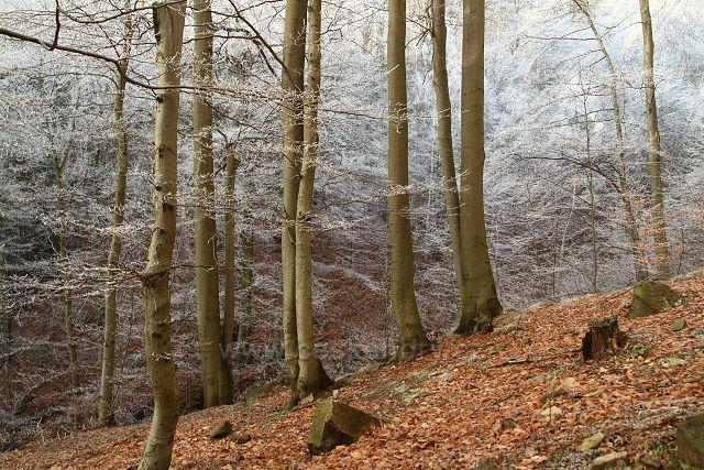 Les nad Rýzmburkem