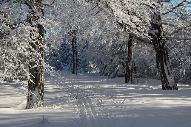V zimním lese