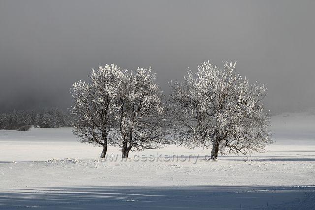 Stromy na Předním Cínovci