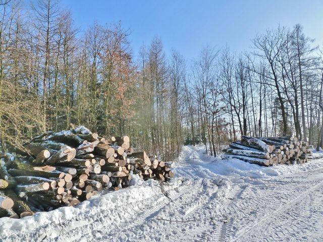 Žamberk -skládka vytěženého dřeva u Lukavské ulice