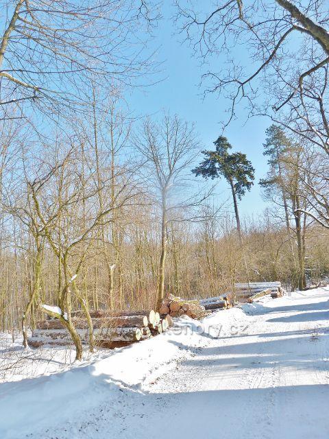 Žamberk - skládky vytěženého dřeva u Lukavské ulice
