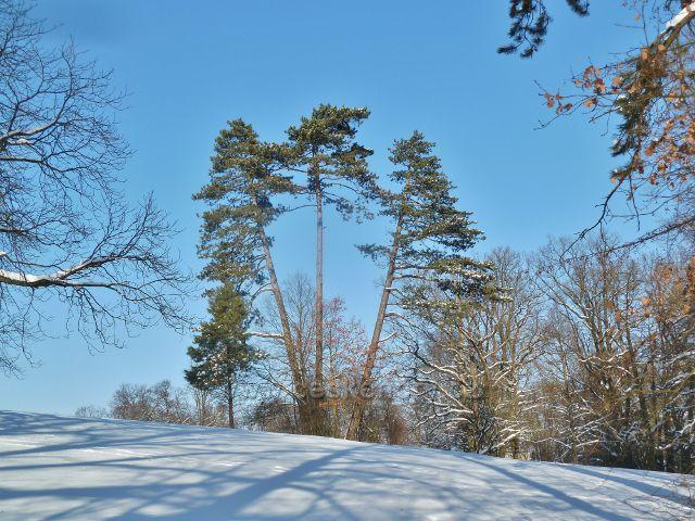 Žamberk - tři grácie v zimním zámeckém parku