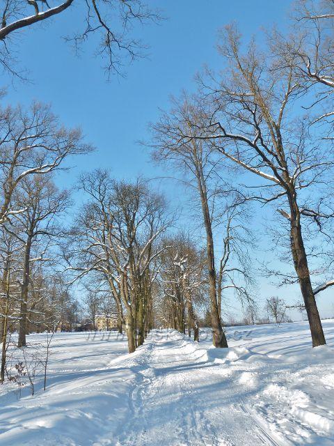 Žamberk - zimní pohled na poslední část kaštanové aleje v zámeckém parku