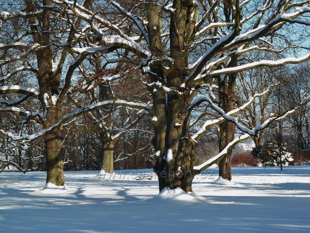 Žamberk - zima v zámeckém parku