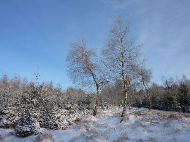 Běžecká oddychovka pod Lesnou