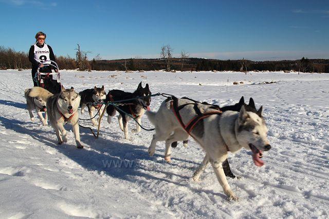 Závody psích spřežení na Lesné