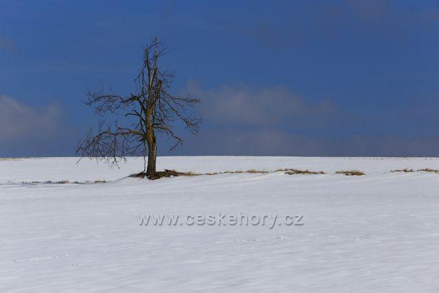 Osamělý strom na pláních