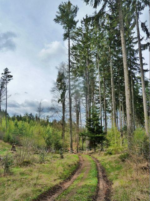 Na trase po červené TZ ke Studeneckému dolnímu lesu