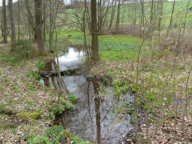 Rybníček na konci Markétina údolí z něhož vytéká potok protékající údolím až do Pastvinské přehrady