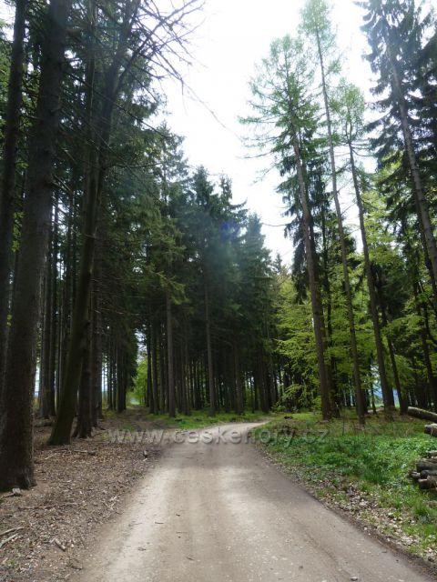 Cesta lesem přes záhorský les do Kunačic
