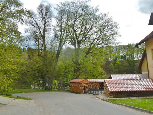 Kunvald - lípy u svatého Jána