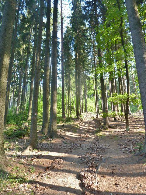Rozhledna Háj - poslední úsek cesty lesem k rozhledně
