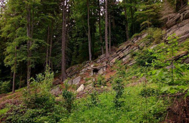 Přírodní rezervace Niva Branné