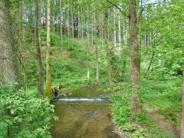 Říčka Moravská Sázava ve stejnojmenném údolí