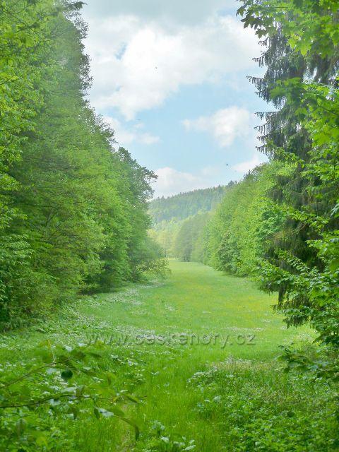 Louka v údolí Moravské Sázavy