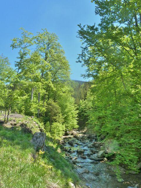 Klepáčský potok poblíž lovecké chaty