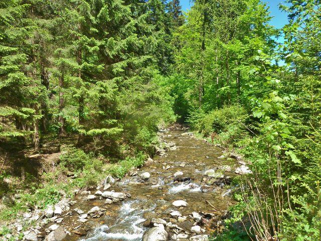 Klepáčský potok - tady stál v potoce a lovil čáp černý