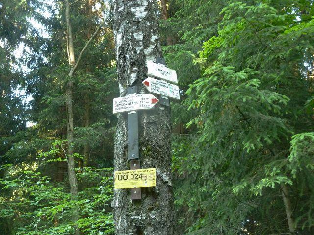 Turistický rozcestník u bývalé mladkovské lesní školky