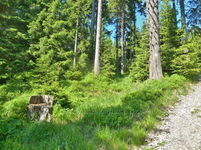 Cestu po žluté TZ ze sedla Vidly k rozcestí Černík lemuje ve vyšších polohách  podrost borůvčí