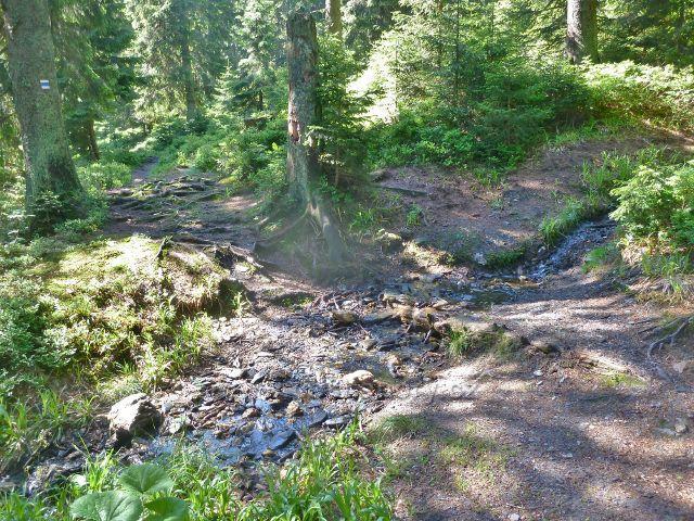 Rozcestí Černík nan trase po žluté TZ ze sedla Vidly na Švýcárnu - stezka po modré TZ odbočuje přes Česnekový potok směrem na střední Opavu