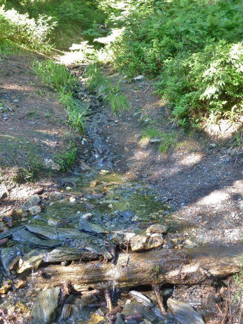 Česnekový potok asi 200 metrů pod svým pramenem