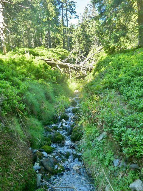 První desítky metrů Česnekového potoka na úbočí  Malého Děda