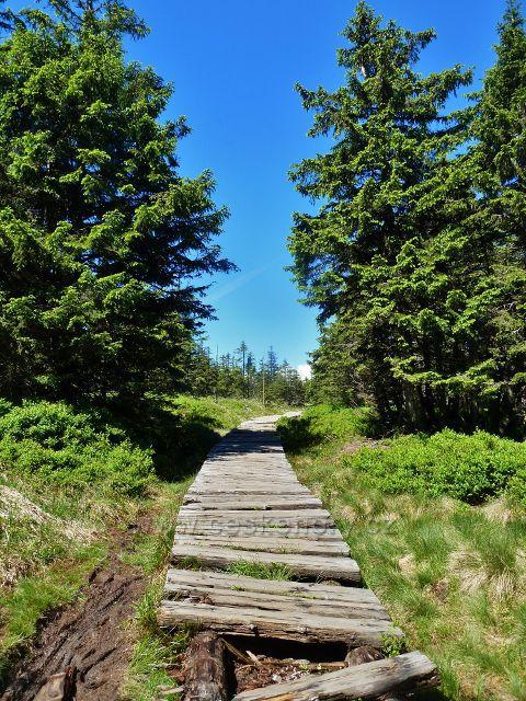 Chodník na červené TZ z rozcestí Slatě k Malému Jezerníku
