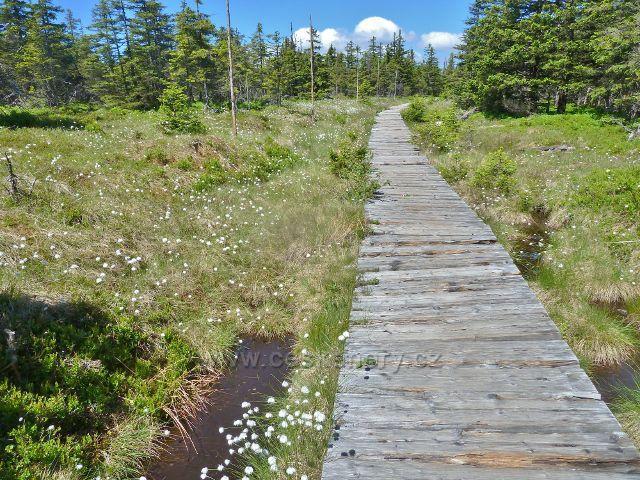Dřevěný chodník na Malý Jezerník je lemován suchopýrem