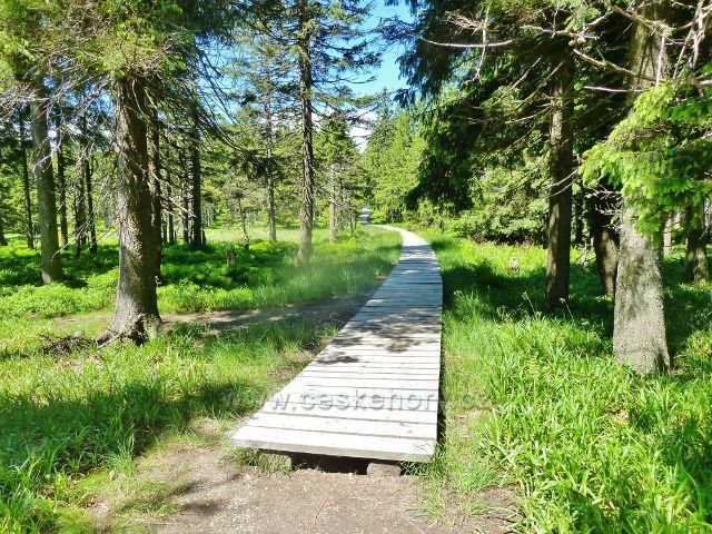 Značná část trasy po červené TZ k Malému Jezerníku vede po dřevěném chodníku