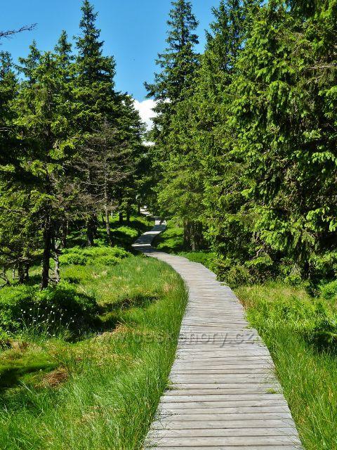 Dřevěný chodník na trase po červené TZ přes Malý Jezerník