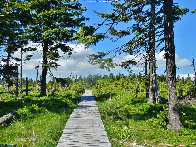 Malý Jezerník - dřevěný chodník na trase po červené TZ