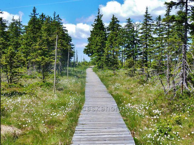 Chodník přes Malý Jezerník lemuje suchopýr