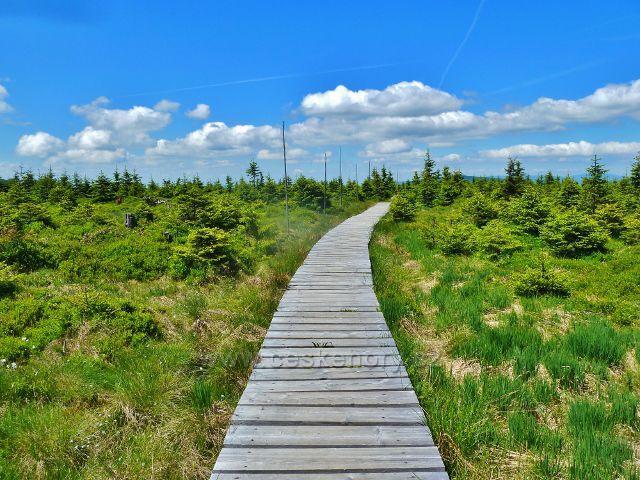 Nízký porost Malého Jezerníku protíná dřevěný chodník trasy po červené TZ