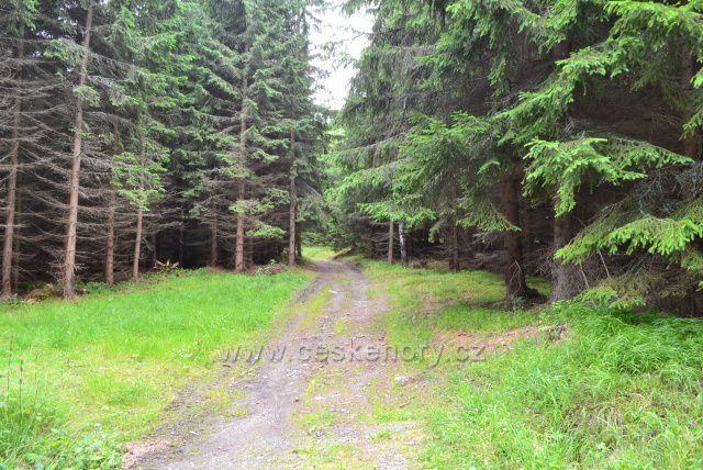 Cestou na Javorový vrch