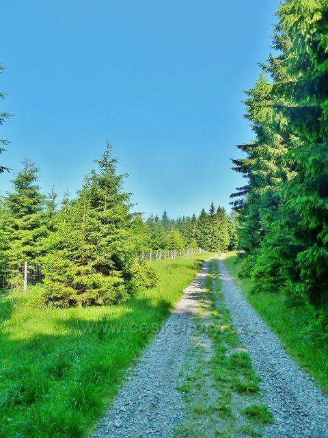 Ostružná - zalesněné louky na Ostružníku podél cesty po zelené TZ na Císařskou chatu