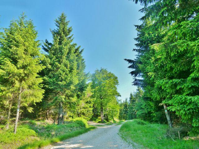 Ostružná - cesta z Ostružníku na Císařskou chatu po zelené TZ