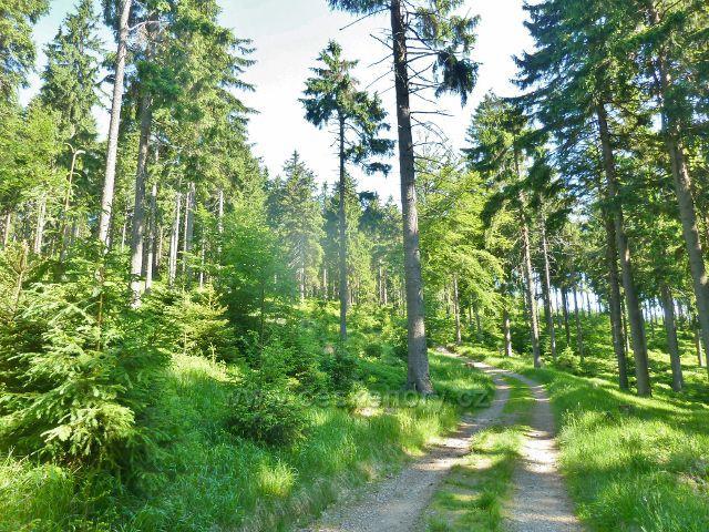 Ostružná - lesní porost kolem cesty po zelené TZ na Císařskou boudu