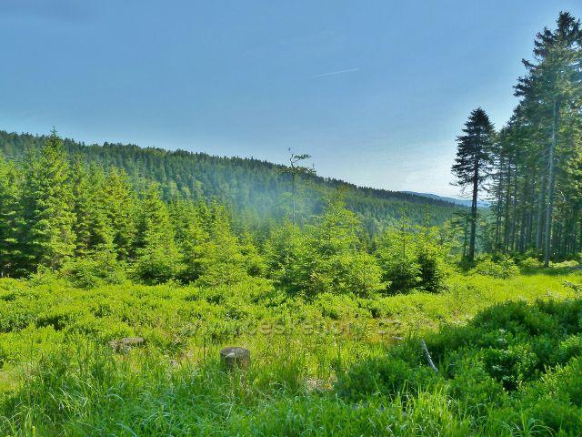 Ostružná - lesní porost pod cestou k Císařské boudě po úbočí Trnové hory