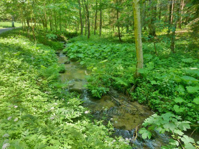 Adamovské údolí - potok Telčava